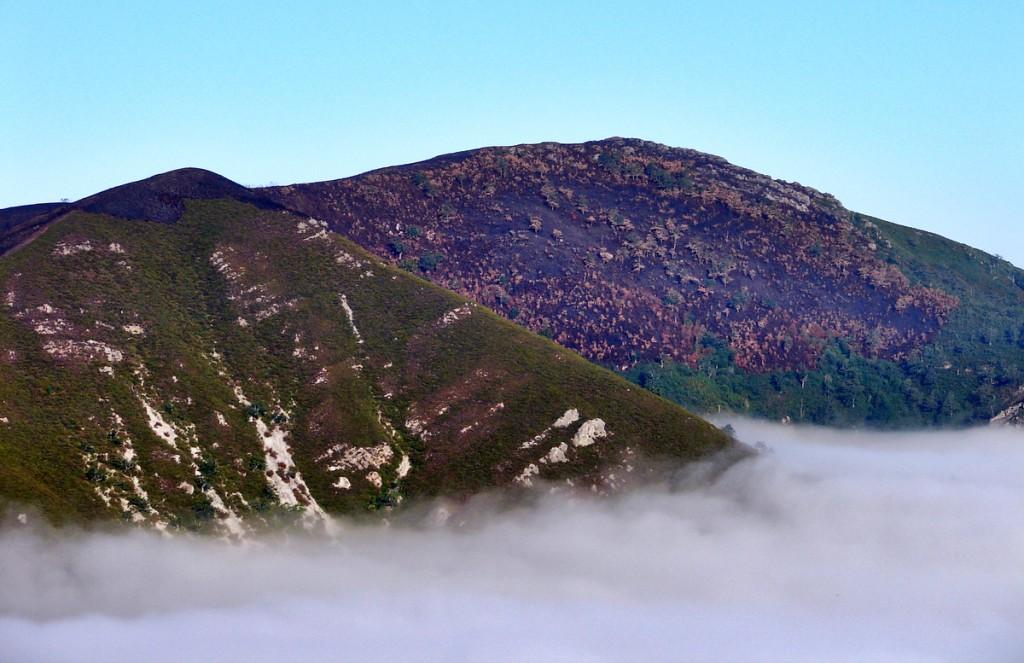 Incendio provocado en el borde noroeste de la Reserva Integral de Muniellos (Ibias, Asturias)
